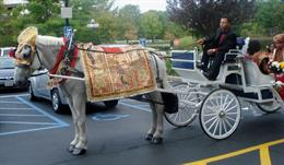 Horse and Carriage Rentals LLC