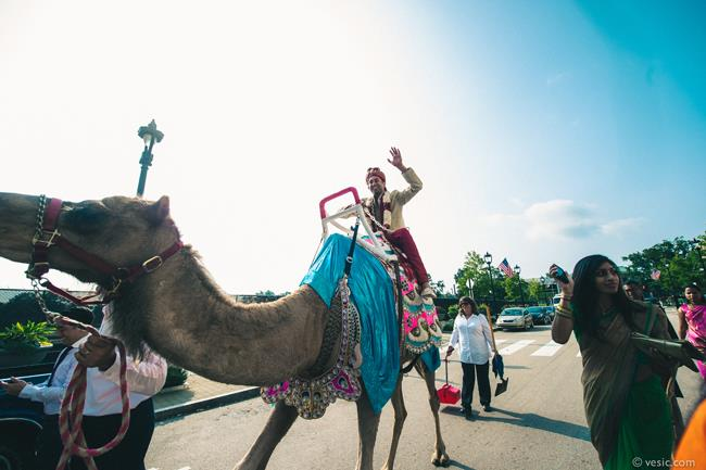 18a indian wedding groom camel baraat